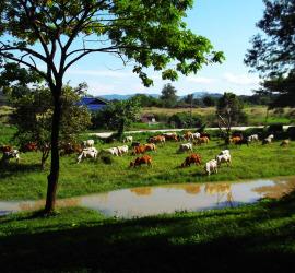 Chiang Rai Adventure Park